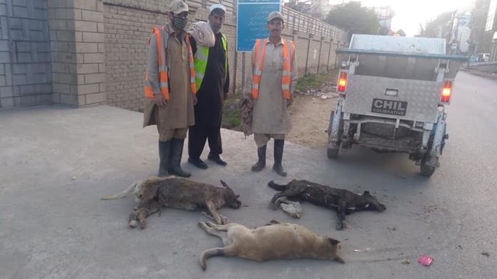 Crackdown against stray dogs in district Swat.