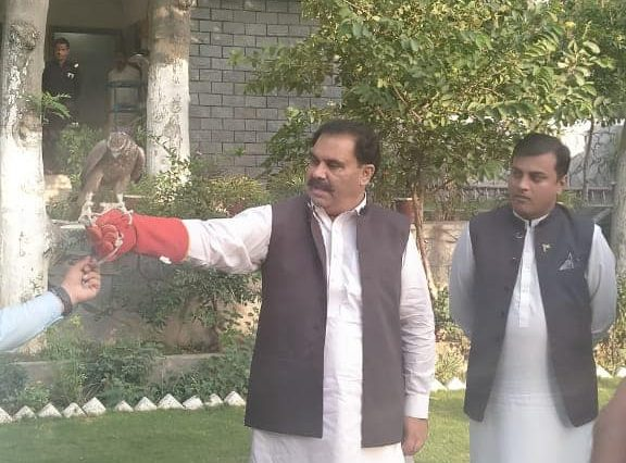 Swat Wildlife Department recovered 5 falcons from smugglers and released them immediately.