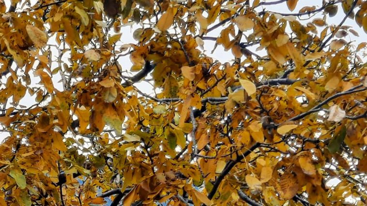 Autumnal vibesHome .