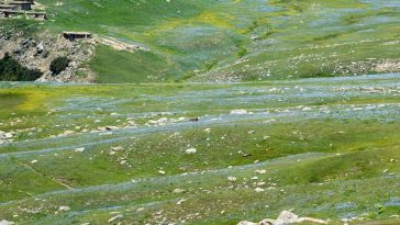Chukail filled with flowers like a stream flowing through the meadow. Chukail se
