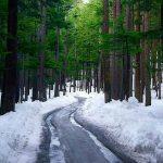 Ushu Forest, Kalam Valley, KPK. . Photo credits