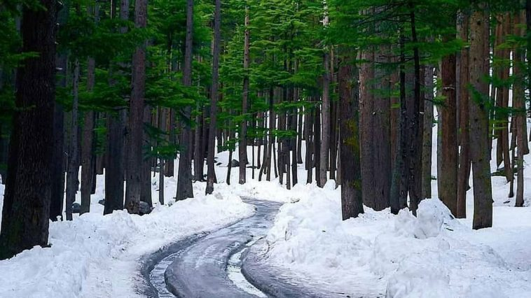 Ushu Forest, Kalam Valley, KPK. . Photo credits  Munir . Visit us Submit your