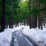 Ushu Forest, Kalam Valley, KPK. .   Salman Munir
