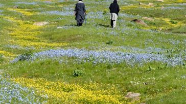 The vastness of Chukail and it's flower carpeted meadows. La inmensidad de Chuka