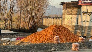 Pakistan's nature and food Next level ........ Organic Oranges
