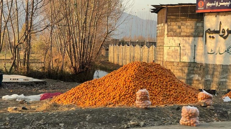Pakistan's nature and food Next level ........ Organic Oranges