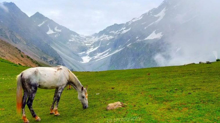 A viwe of swat valley gurnal side baskar meadwas Happy  to all mountains lovers.