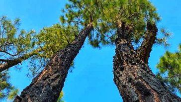 Vj Nelson Photography /FilmsNature Beauty Of PakistanColor Full Tree