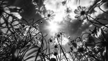 Vj Nelson Photography /FilmsNature Beauty Of PakistanBlack in White