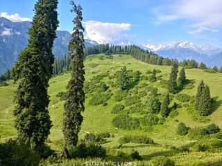 May be an image of mountain, tree and nature