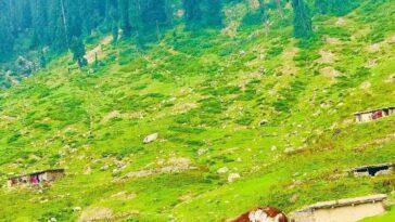 Swat Valley Jhargo Banda Matta KPKBy