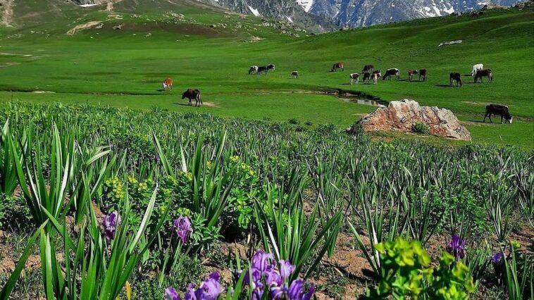 Bishai Meadows, Kalam . . . . follow: credits: follow: . . .
